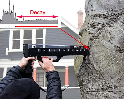 Tree resistograph demonstration